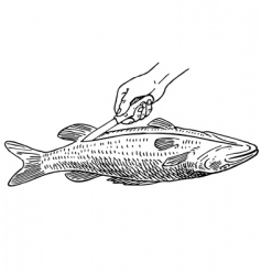 Cooking fish vector