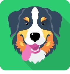 Bernese mountain dog icon flat design vector