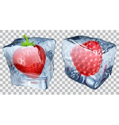 Transparent ice cubes with strawberry raspberry vector