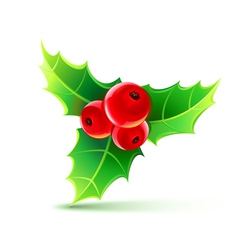 Holly leaves and berries vector
