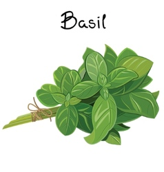Basil sprig vector