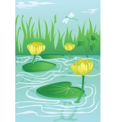 Yellow water-lilies in calm water vector
