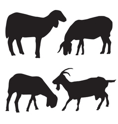 Sheep and goat silhouettes vector