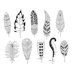 Black and white feathers vector