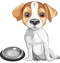 Dog jack russell terrier breed vector