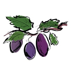 Plum on the branch vector