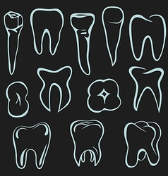 Human teeth vector