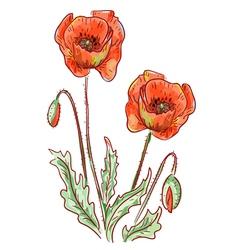 Red poppy vector