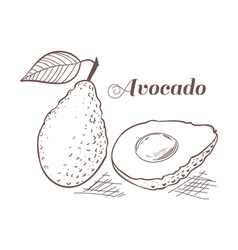 Engraving style avocado vector