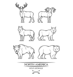 Animals in north america vector