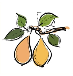 Pears fruit vector