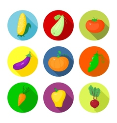 Set round icons with vegetables vector