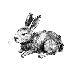 Hand drawn rabbit on white vector