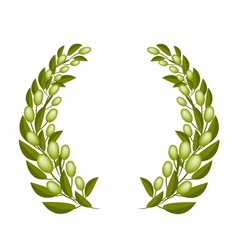 A beautifu olive wreaths on white background vector