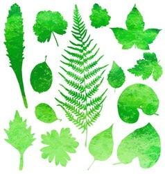 Set of garden watercolor leaves vector