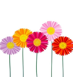 Gerber daisy isolated on white background vector