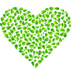 Heart made of fresh green leaves vector
