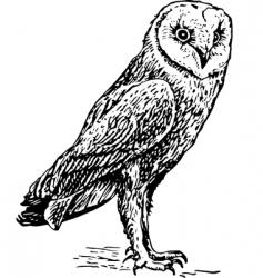 Owl tyro alba sketch vector