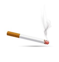 Smoldering cigarette on a white background vector