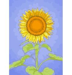 Sunflower and blue sky vector