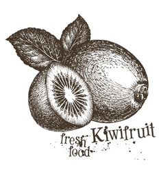 Kiwi logo design template fresh fruit vector