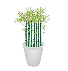 Green bammboo tree in a flower pot vector
