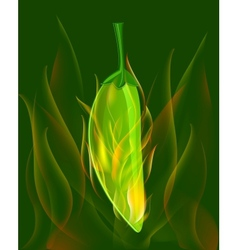 Red chili pepper in fire vector