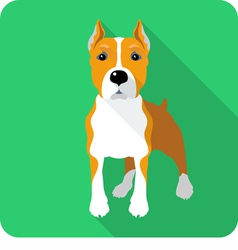 Dog american staffordshire terrier standing icon f vector