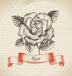 Rose hand drawn vintage design vector