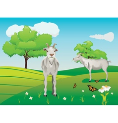 Goat and green lawn3 vector