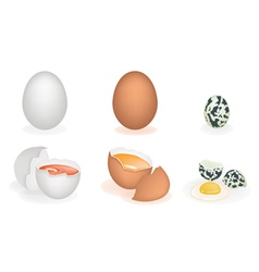 Set of three different eggs vector