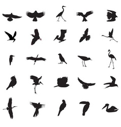 Different kind of bird vector