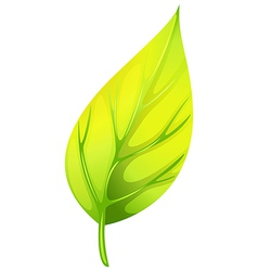 A pointed leaf vector