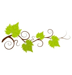 Beautiful green grape vine background vector