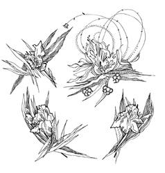 Iris fantazy flowers vector