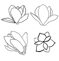 Set of magnolia flowers vector