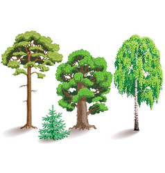 Types of trees vector