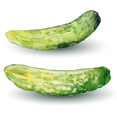 Cucumber watercolor vector