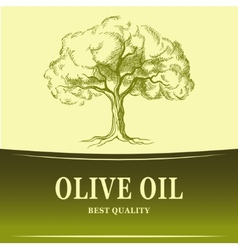 Olive oil olive tree for labels pack vector