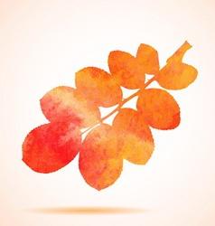 Orange watercolor dog-rose leaf vector