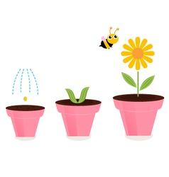 Flower in pots growth stages isolated on white vector