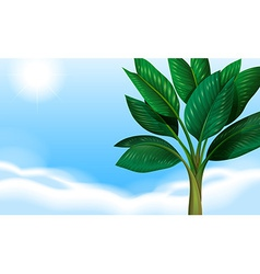 A clear blue sky and the green leaves vector