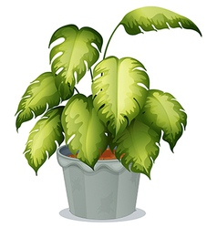 An ornamental plant in a pot vector