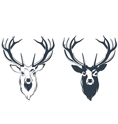 Male red deer head vector