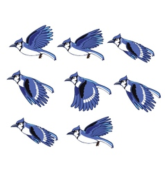 Blue jay animation sprite vector