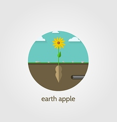 Flat icon for jerusalem artichoke vector