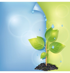 Eco background with plant and water drops vector