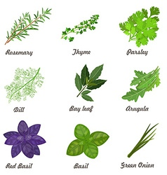 Collection of herbs for you design vector