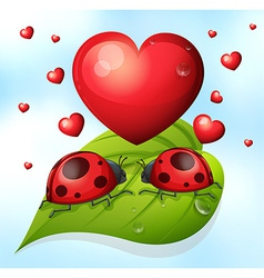 Lady bugs and heart vector