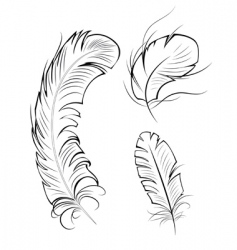 Three contour feathers vector